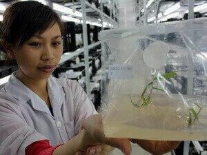Nông nghiệp công nghệ cao Lâm Đồng