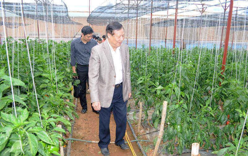 Ứng dụng Vietgap trong sản xuất nông nghiệp công nghệ cao tại Lâm Đồng