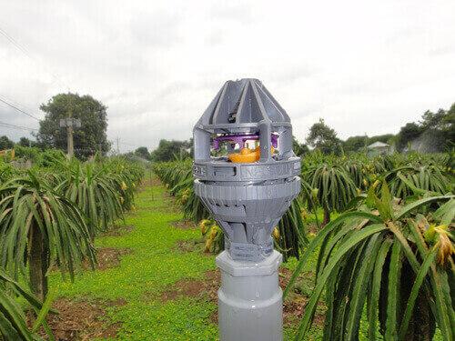 Tưới Thanh Long bằng phương pháp phun mưa