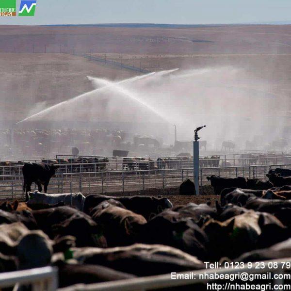 Giải pháp tưới mát trang trại nuôi bò