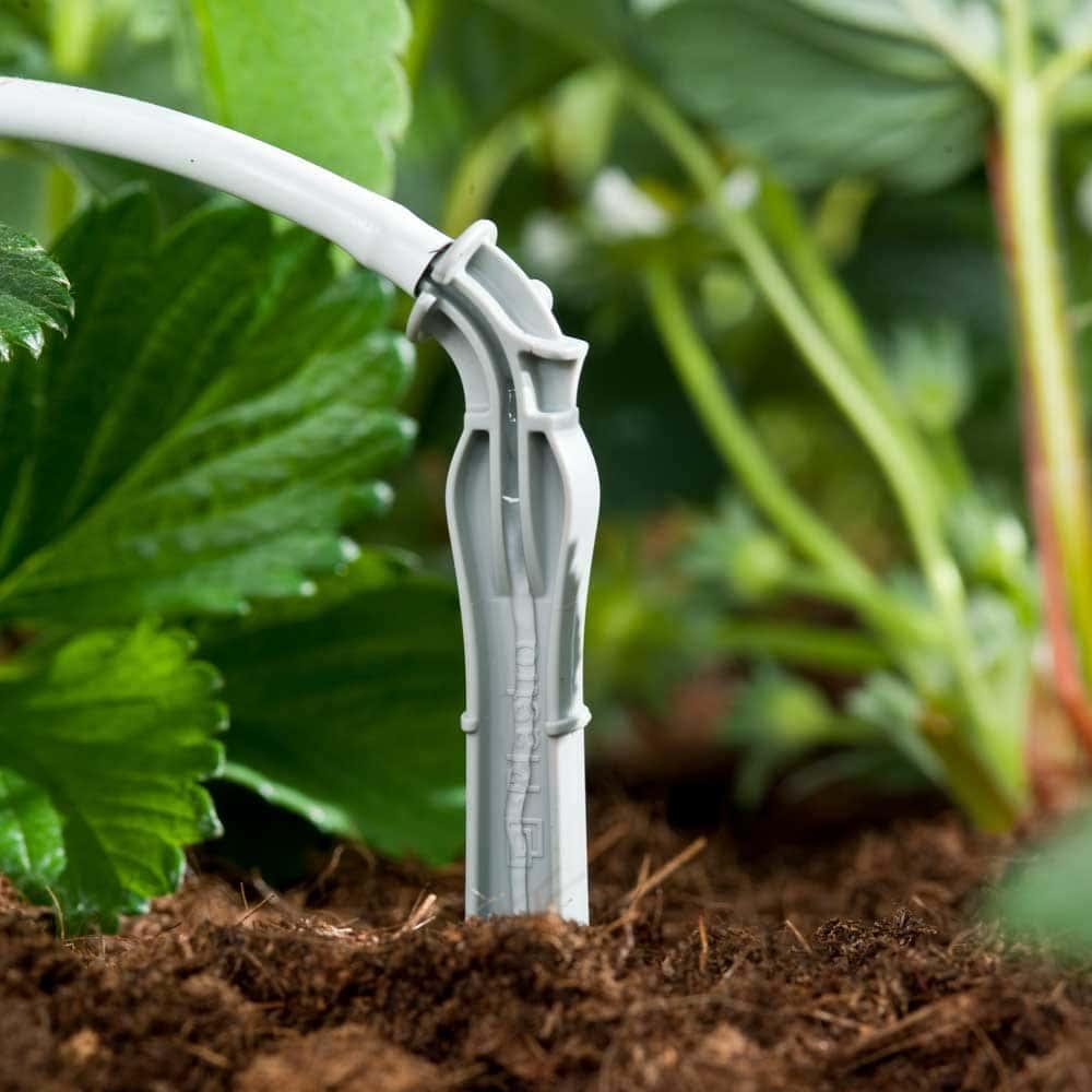 Que cắm nhỏ giọt Dripeg chuyên tưới cây trồng trong bịch giá thể