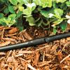ống tưới nhỏ giọt micro dripline của DIG