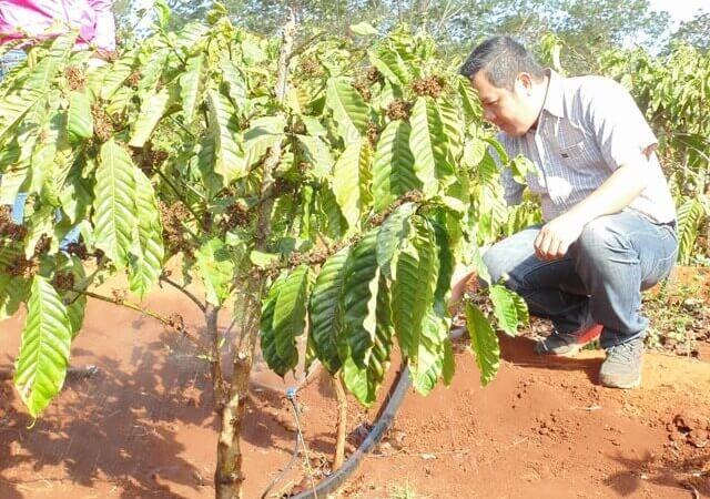 Công nghệ tưới nhỏ giọt cho cây cà phê - Nhà Bè Agri