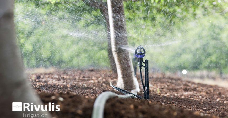 tưới phun mưa cục bộ hiệu quả bằng s2000