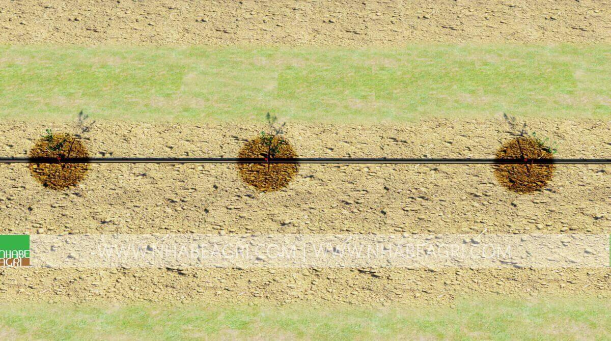 đầu bù áp tưới nỏ giọt cho cây ăn trái