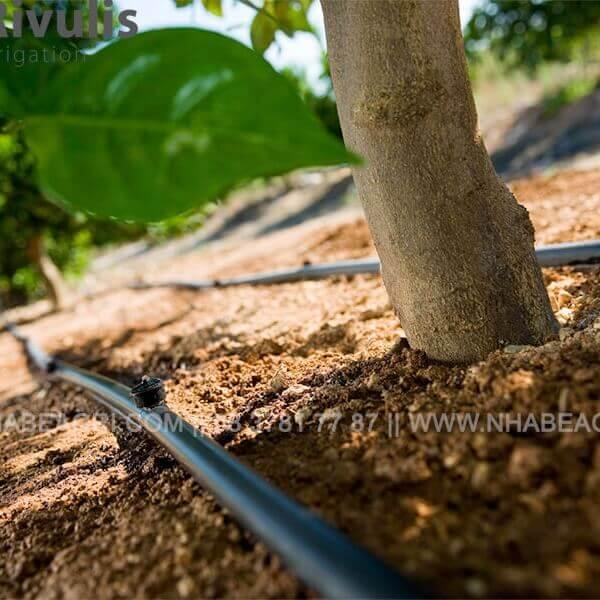 Đầu tưới nhỏ giọt Supetif cho cây ăn trái, cây công nghiệp