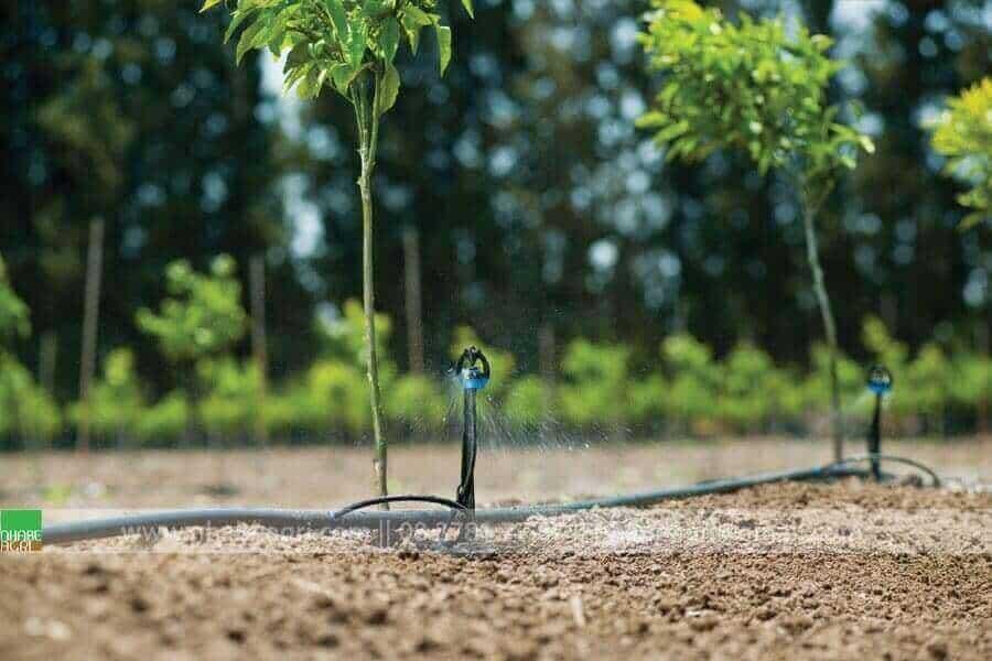 Tưới phun mưa cho cây trồng tán rộng