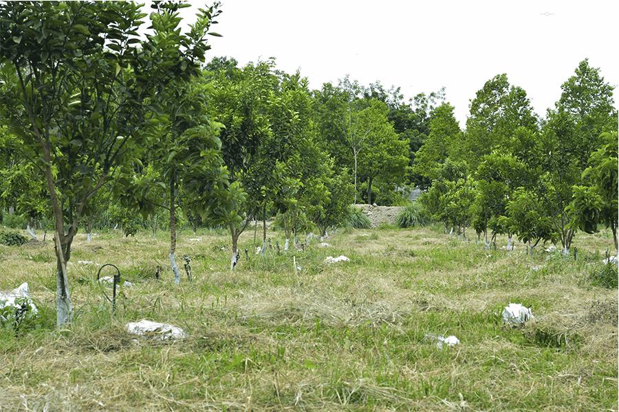 béc tưới cây phun mưa