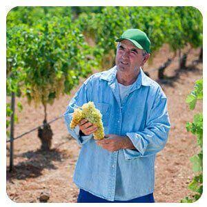 Giải pháp nông nghiệp Juresalem