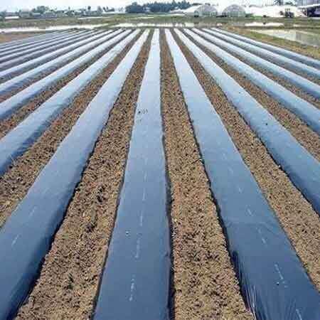Màng phủ nông nghiệp tự hủy cao cấp Nhà bè agri