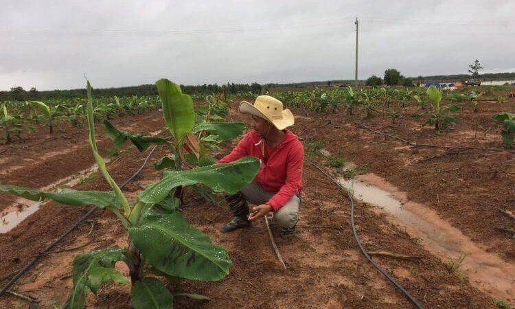Đắk Lắk phát triển nông nghiệp công nghệ cao.