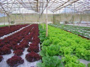 Màn phủ nông nghiệp