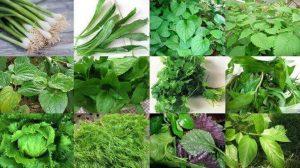 Để rau thơm không bị dập nên áp dụng tưới công nghệ cao.