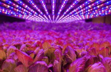 Trồng rau bằng công nghệ đèn LED