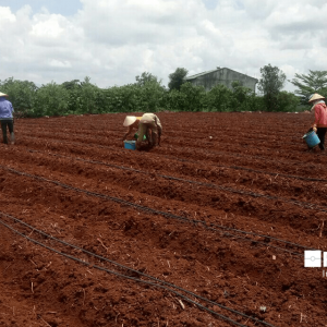 Bà con đang ươm hạt giống sau khi lắp đặt hệ thống tưới nhỏ giọt rải dọc luống