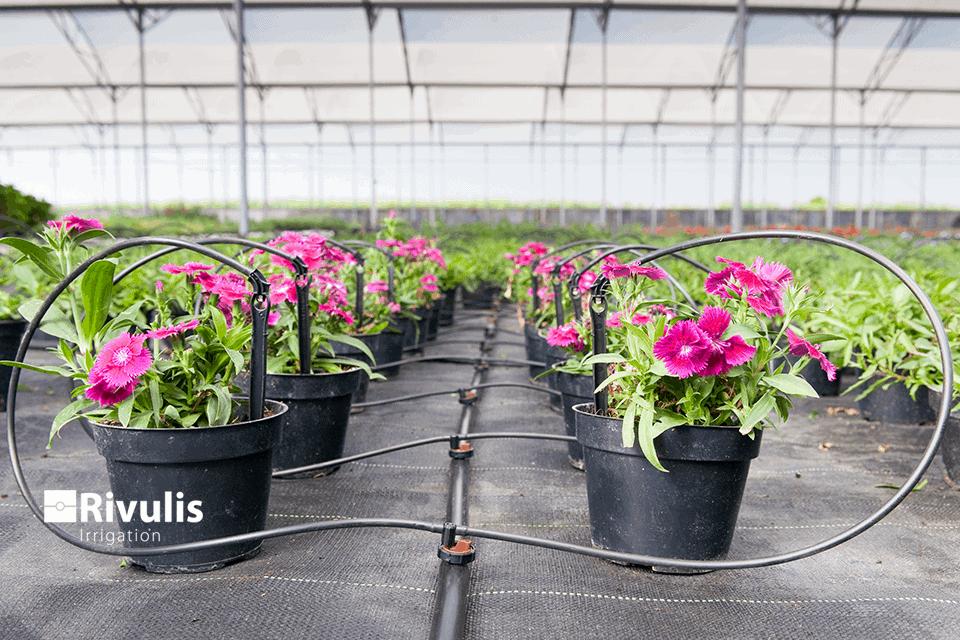 Cách sử dụng đầu tưới nhỏ giọt 2 lít/h tưới vườn tường, cây trồng chậu