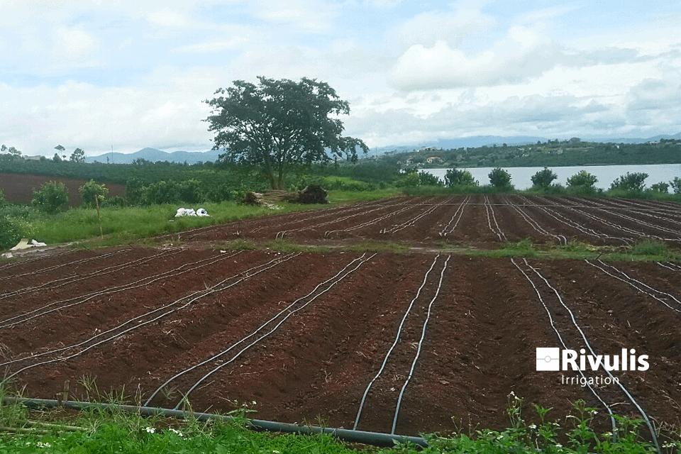 Dự án tưới nhỏ giọt rải dọc luống sử dụng dây nhỏ giọt Rivulis Eolos Garden