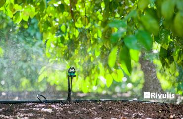 tưới phun mưa cục bộ cho cây ăn trái rivulis s2000