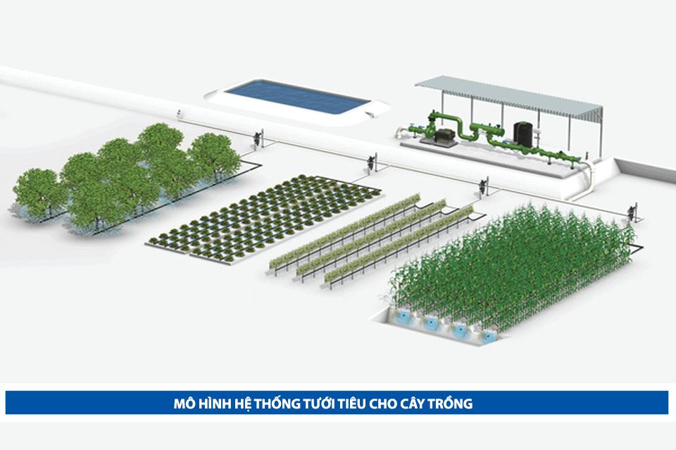 Sử dụng hệ thống tưới tiêu cho cây trồng