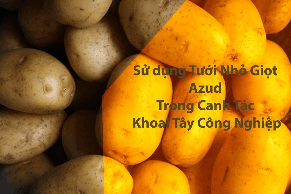 Tưới nhỏ giọt azud khoai tây công nghiệp