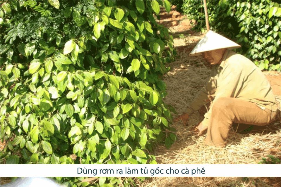 Kỹ Thuật Chăm Sóc Cây Cà Phê - Thiết bị tưới nông nghiệp