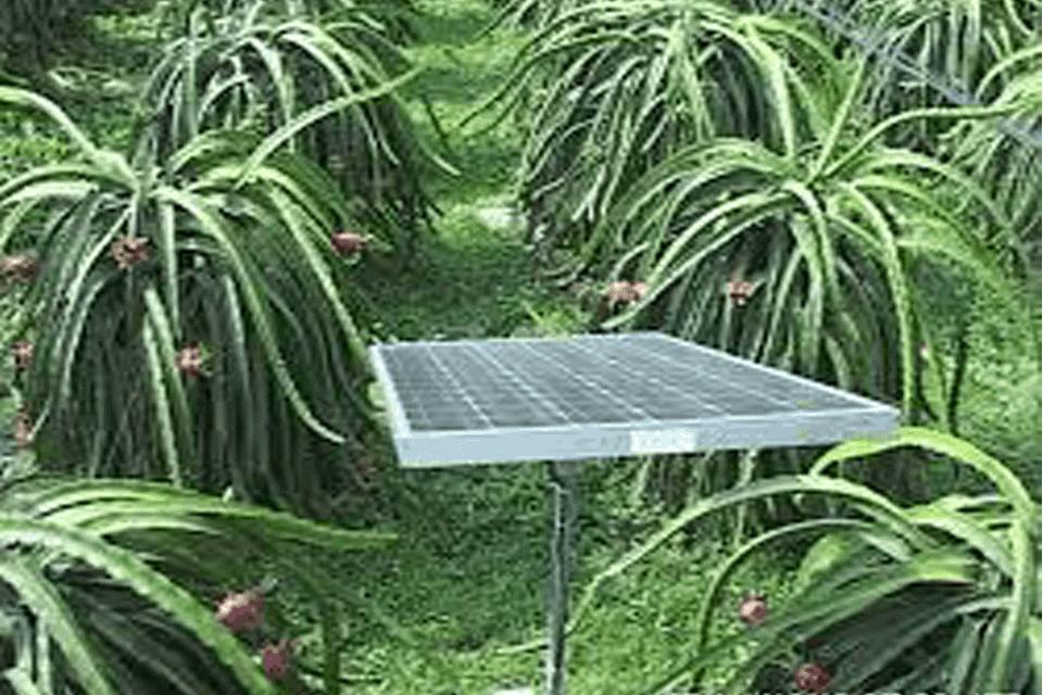 Hệ thống tưới nhỏ giọt bằng năng lượng mặt trời cho thanh long