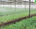 Những lợi ích hệ thống phun sương đối với cây trồng