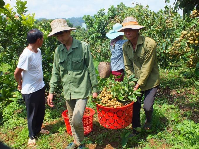 Chủ động giải tỏa vướng mắc tiêu thụ, xuất khẩu nông sản